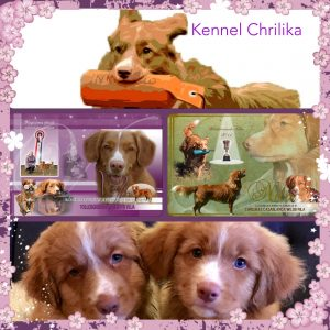 Kennel Chrilikas