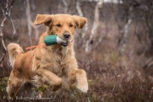Shanti. Foto: Evy Birkestrand Johansen