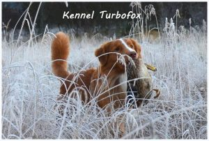 Kennel Turbofox