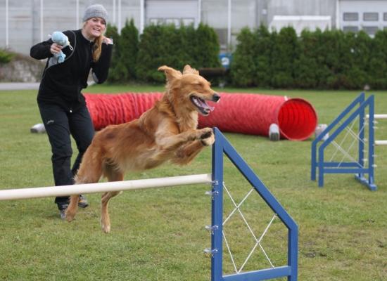 Retrievermester i agility klasse 2 og klasse 3, samt agility hopp klasse 2 og 3, 2011: Jacklaines Brilliant. Eier og fører: Martine Hansen, Andebu.